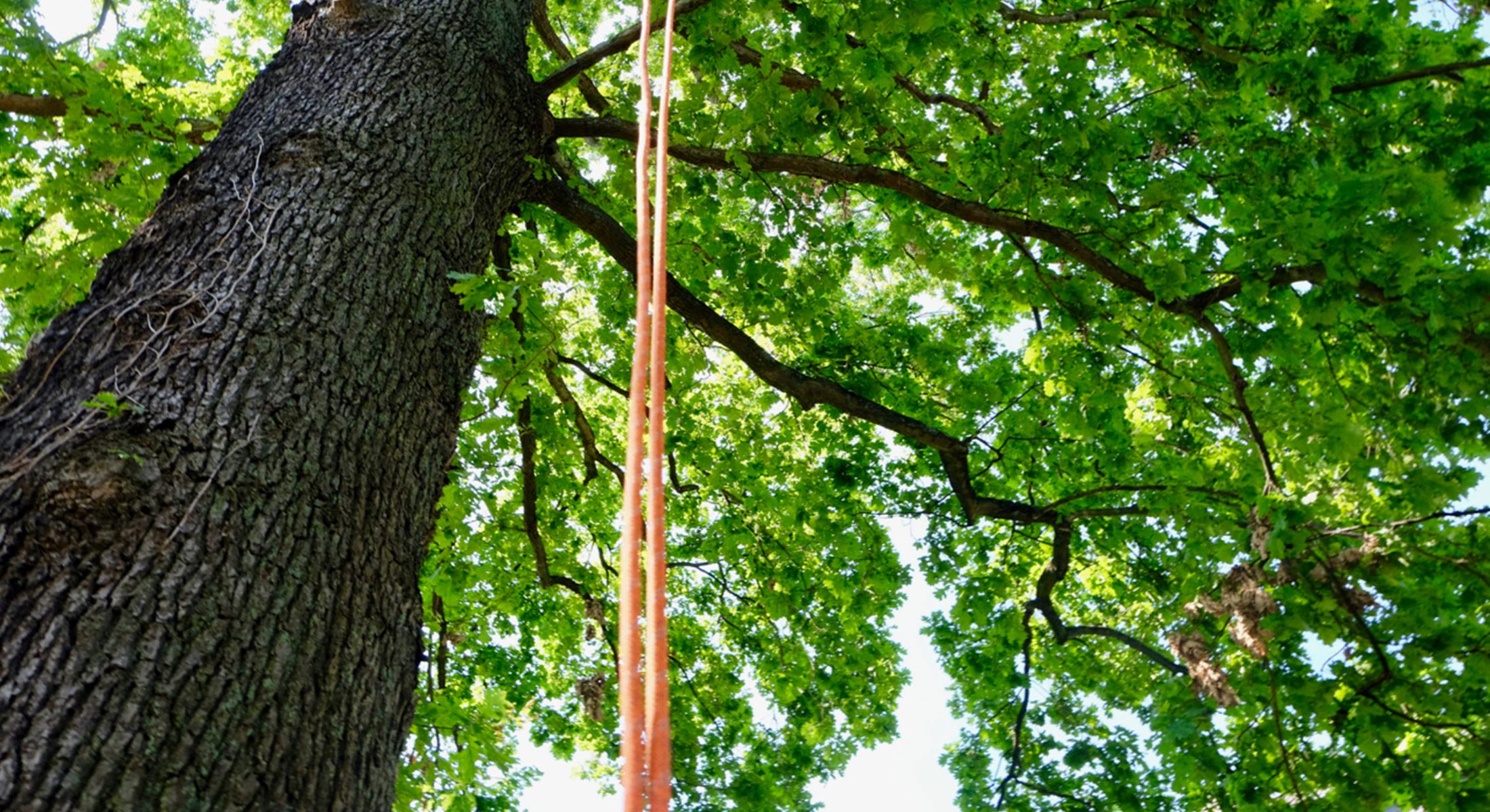 Baumpflege und Baumfällung in Essen und Umgebung